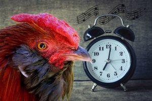 NREMT Cognitive Exam Alarm Clock