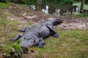 Alabama EMT training Alligator Alley in Alabama
