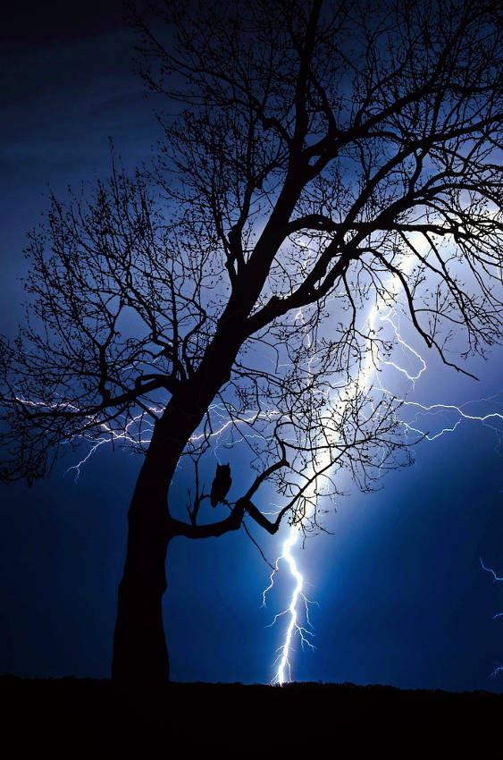 Thunderstorm Electricity Strikes Tree