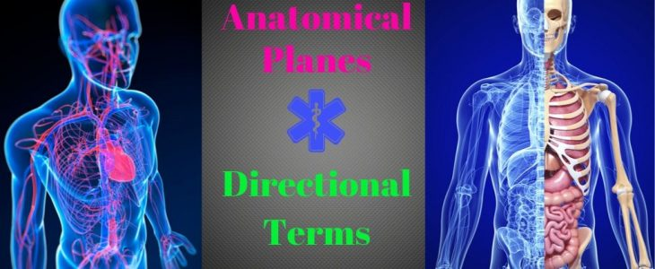 Anatomical Planes and Directional Terms