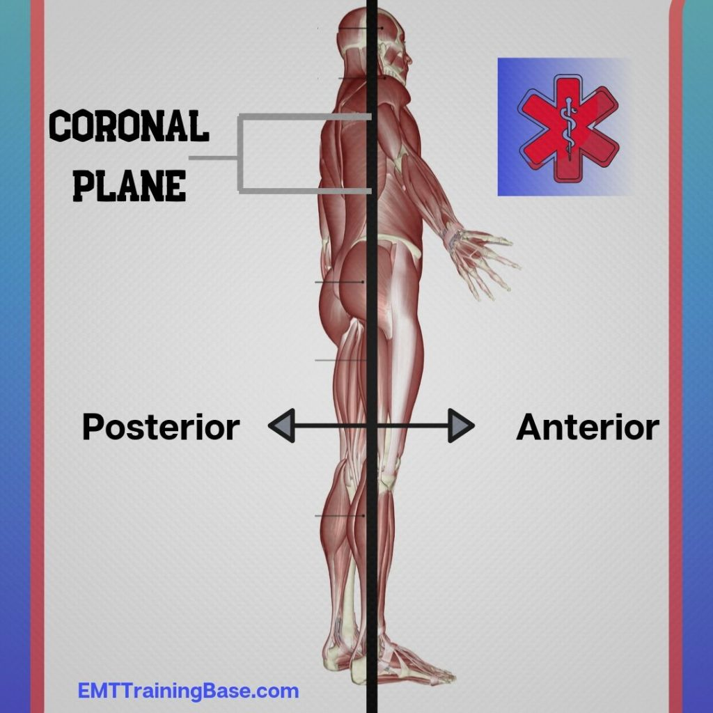 Frontal Plane Anterior and Posterior