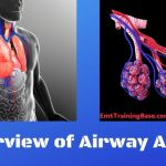An Overview of Airway Anatomy