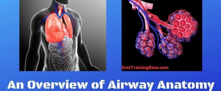 Airway Anatomy Title